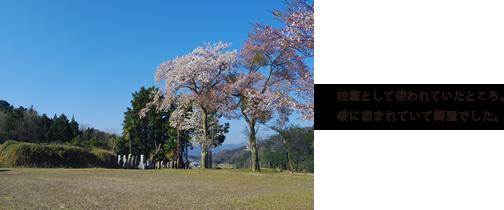 校庭として使われていたところ。桜に囲まれていて綺麗でした。